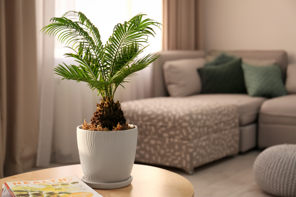 Palm Tree Care: Your Essential Guide - indoor palm tree