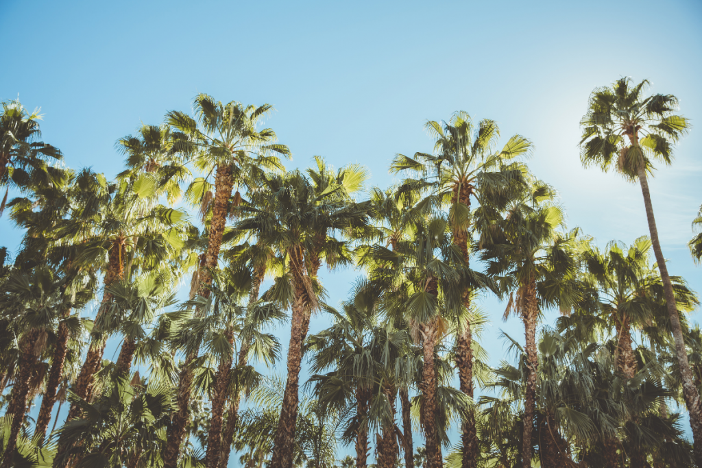 Palm Tree Care: Your Essential Guide - palm tree care