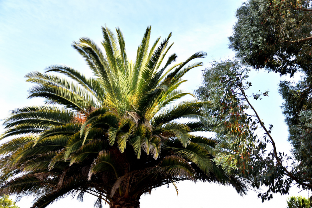 Palm Tree Care: Your Essential Guide - palm tree care guide 1